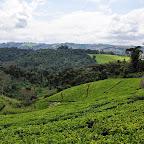 Teefelder im Hochland von Mufindi in Südtansania. © Foto: Marco Penzel | Outback Africa Erlebnisreisen