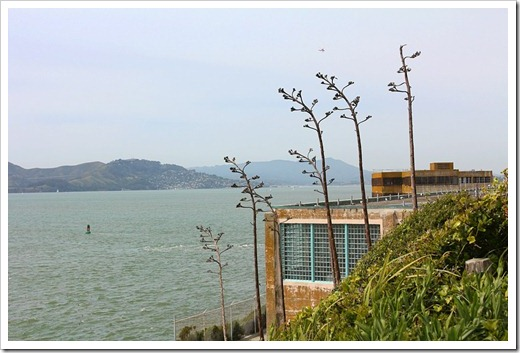120408_Alcatraz_315