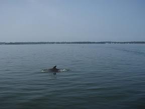 Dolphins wishing us well on our departure...
