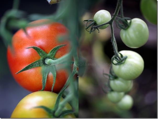 Zupa pomidorowa Billa Grangera1