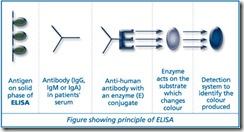elisa_principle