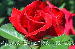 9   - Glória Ishizaka - Rosas do Jardim Botânico Nagai - Osaka