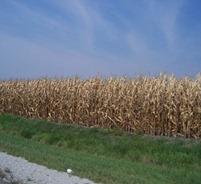 IllinoisCornfields-lkh