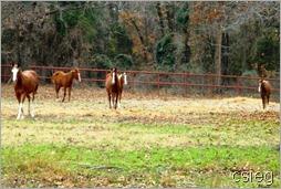 Ponies 1 02