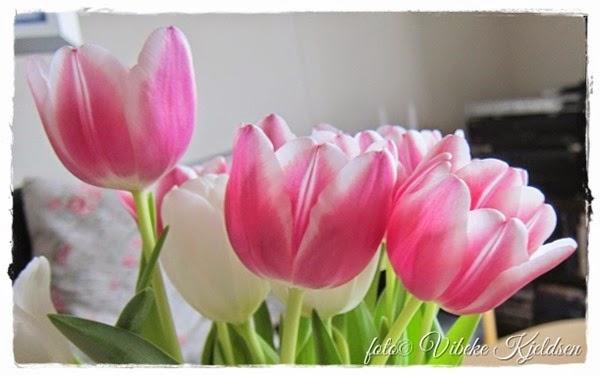 tulips_2015