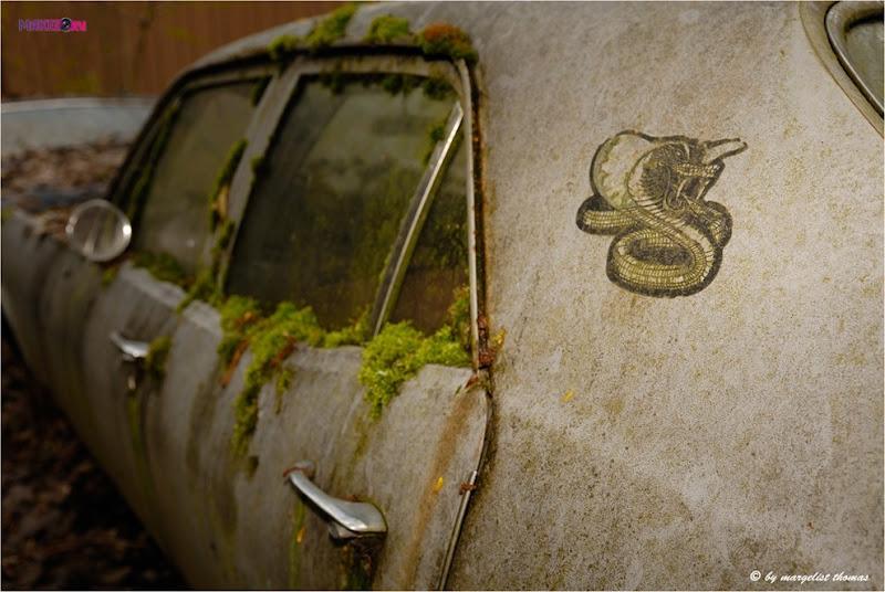 cars_004.jpg