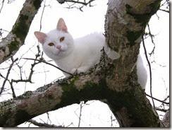 Gato_Cat_114[2]
