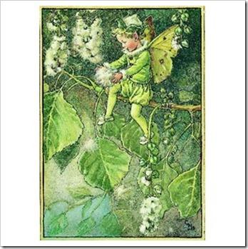 poplar_fairy