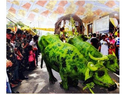 Carabao Festival Angono May 14