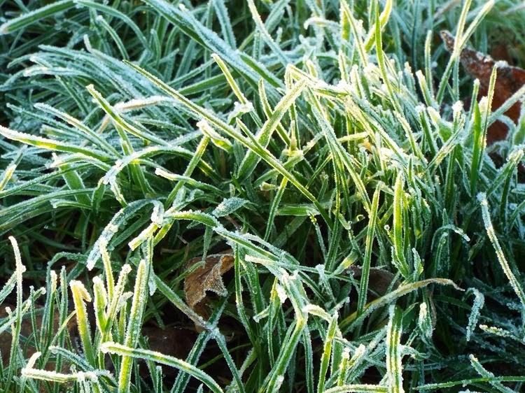 crunchy grass