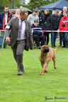 20100513-Bullmastiff-Clubmatch_31165.jpg