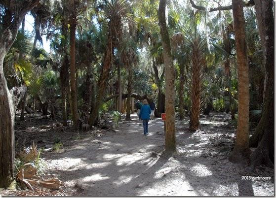 Myakka canopy trail 011