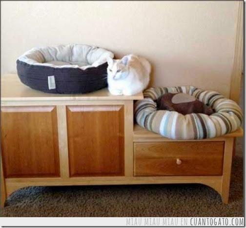 GATOS HUMOR (3)  imagenes divertidas de gatos cosasdivertidas net