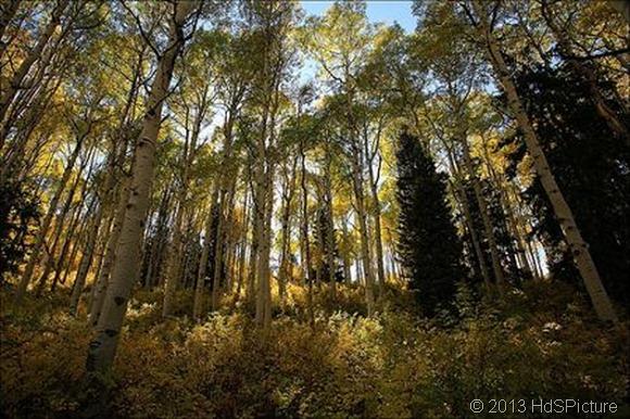 Pendahuluan dan Pengertian Ekosistem