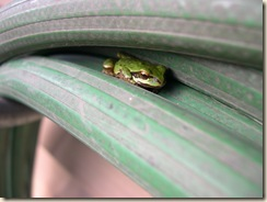 hose frog