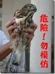 猛禽的爪子很利,徒手抓猛禽會有危險性