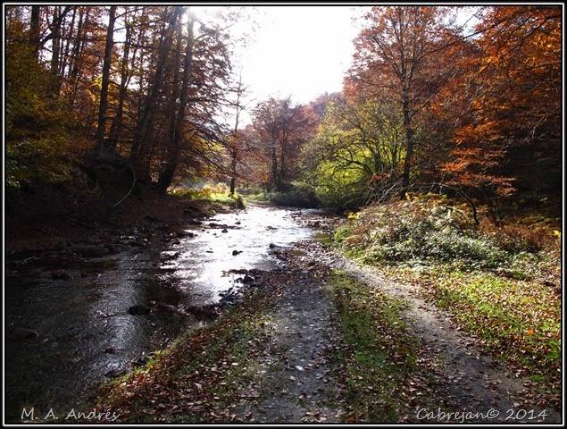 Lantz otoño 101