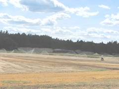 rebuilding cranberry bog putting in main sprinkler line Plympton3. 7.1.12