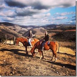 horses again
