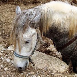 by Nena Dankić - Animals Horses