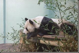 16_12_2014-10_20_46-6074Edinburgh Zoo