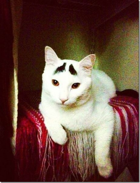 white-cat-eyebrows-28