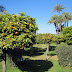 Orangenbume in Marrakesch