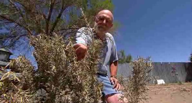 Magdalena, N.M. resident Dale Fuller inspects dried up plants. The town's well has run dry, and citizens are rationing water bottles, and using porta-potties while trying to conserve as much as possible. Photo: NBC Nightly News