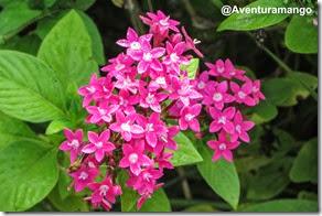 Flora em Cuba
