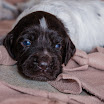 Puppies_Tria-01395.jpg