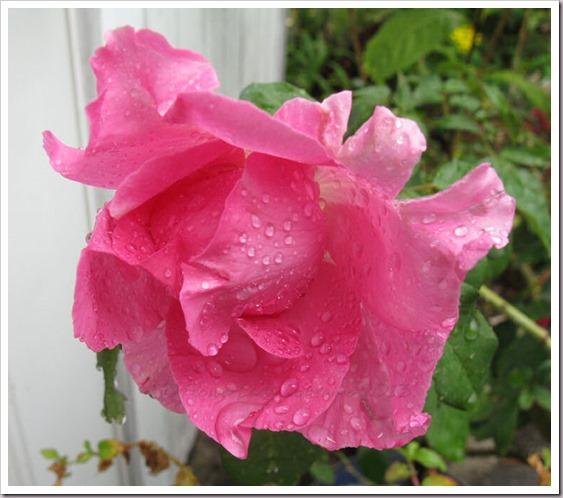05-01-paul-mc-rose