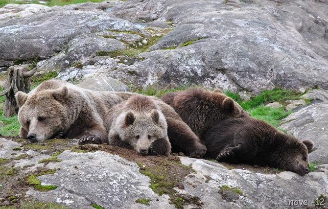 Bjørneparken 132