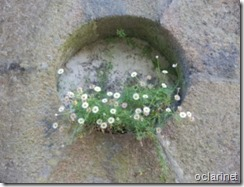 Buraco florido.Ago 2013