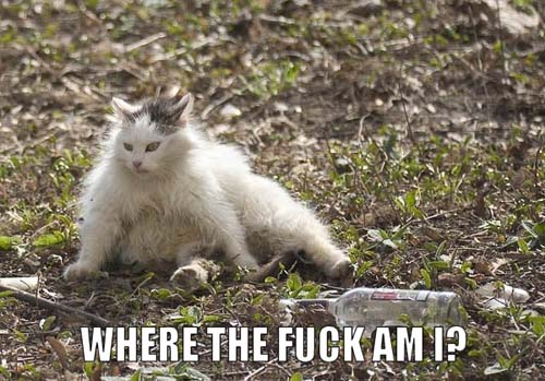 where the lolcat?
