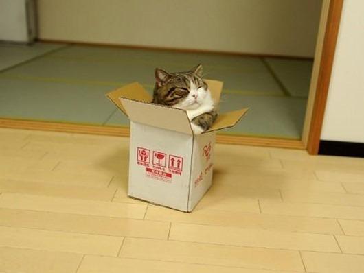 Japan_cat_02