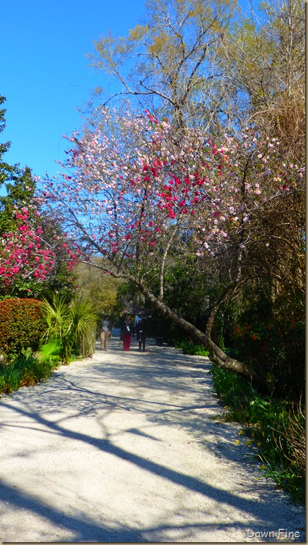 Magnolia Plantation_008