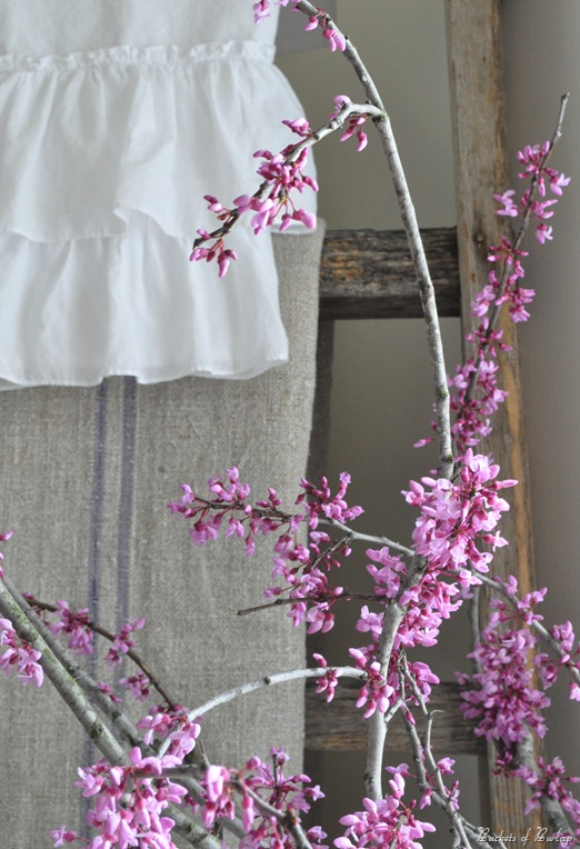 redbuds &amp; ladder
