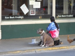 Panhandling Dog from last year still around
