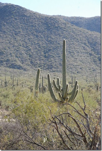 01-02-12 Saguaro National Park - West 070