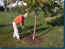 fertilize trees