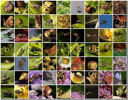 insectos1
