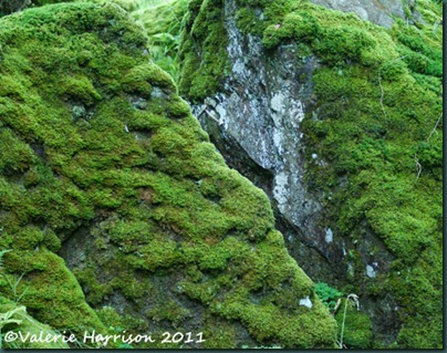 29-moss-covered-rocks