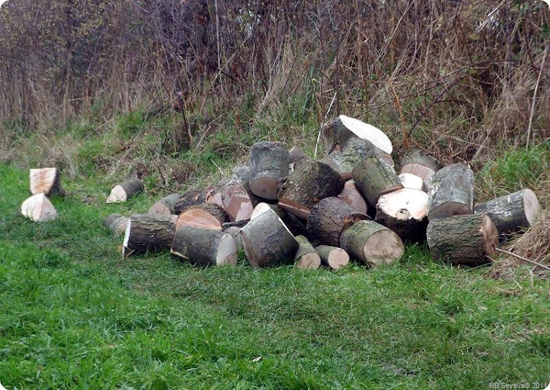 SAM_0001 Log Pile