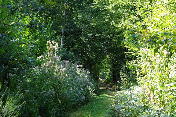 L'allée forestière, le 23 août 2012. Les Hautes-Lisières (Rouvres, 28). Photo : J.-M. Gayman