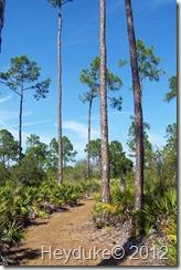 Slash Pine Flatwoods