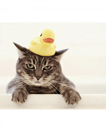 A paddling of ducks. A kindle of kittens...or rather, 'one not-so-amused-kitten with a duck on her head...'