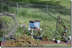bee swarm - The Backyard Farmwife