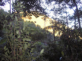 Sunlight in the forest of Poco Ngandonalu (Daniel Quinn, August 2010)
