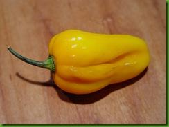 Pepper Yellow Habanero
