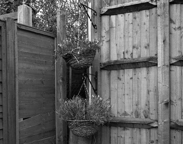 The-Garden016.jpg